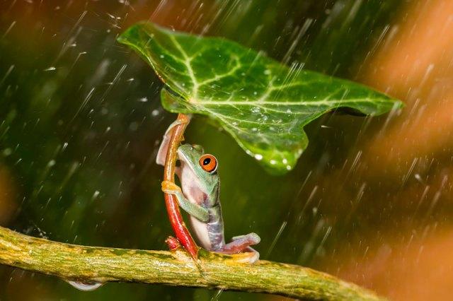 fotos-curiosas-ranas-anfibios (2)
