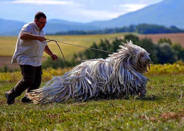fotos-divertidas-perros-gigantes (15)