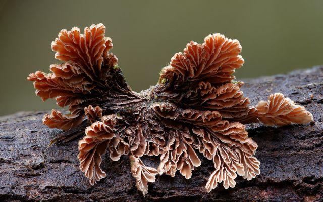 fotos-macro-hongos-steve-axford (19)