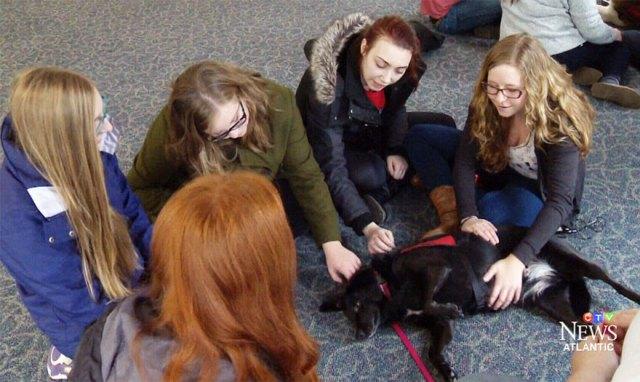 habitacion-cachorros-estudiantes-estresados-universidad-lancashire (1)