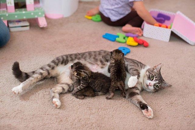 madre-gata-adopta-3-gatitos-huerfanos-mikey-texas (3)