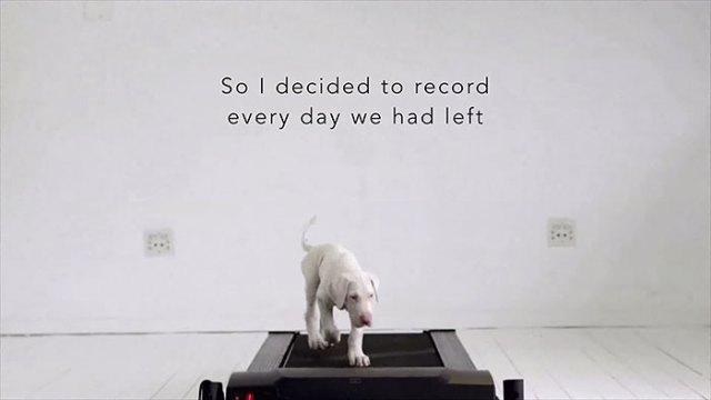 perro-rescatado-pegasus-creciendo-dave-meinert (4)