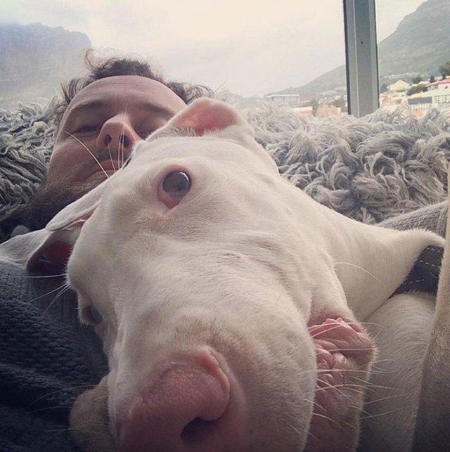 perro-rescatado-pegasus-creciendo-dave-meinert (5)