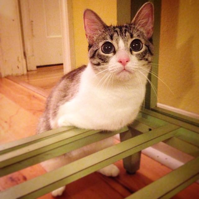 roux-gato-adoptado-2-patas-instagram (1)