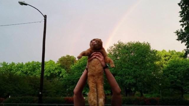 russel-gato-superviviente-cuida-animales-hospital (11)