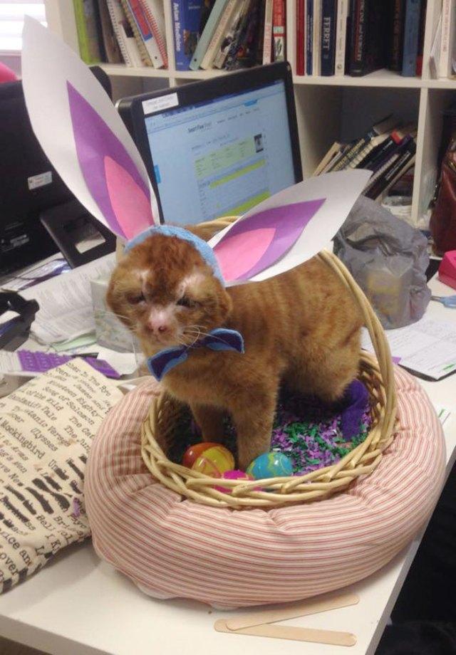 russel-gato-superviviente-cuida-animales-hospital (13)