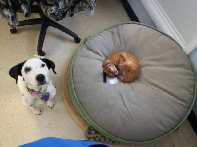 russel-gato-superviviente-cuida-animales-hospital (5)