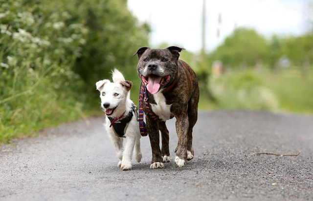 amistad-animal-perros-abandonados-ciego-glenn-guia-buzz (3)