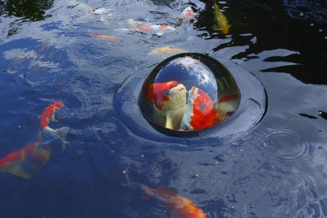 cupula-flotante-peces-koi-velda (3)