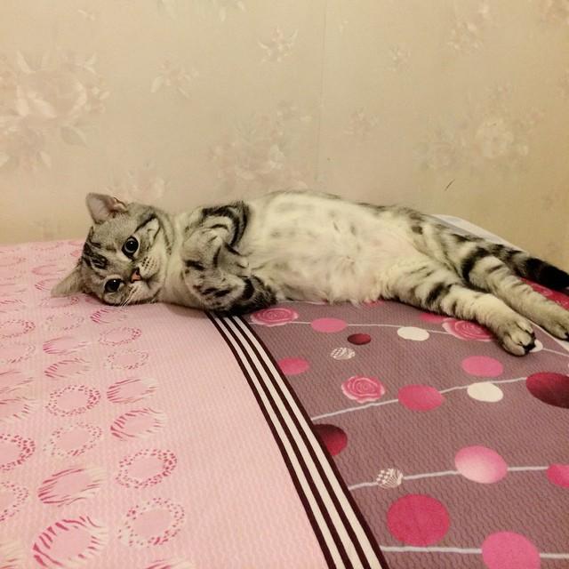 gato-triste-luhu-maggie-liu (1)