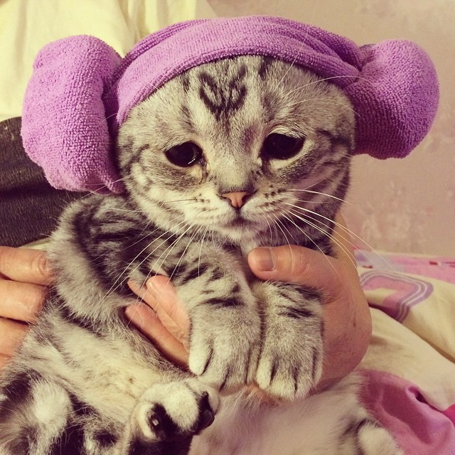 gato-triste-luhu-maggie-liu (2)