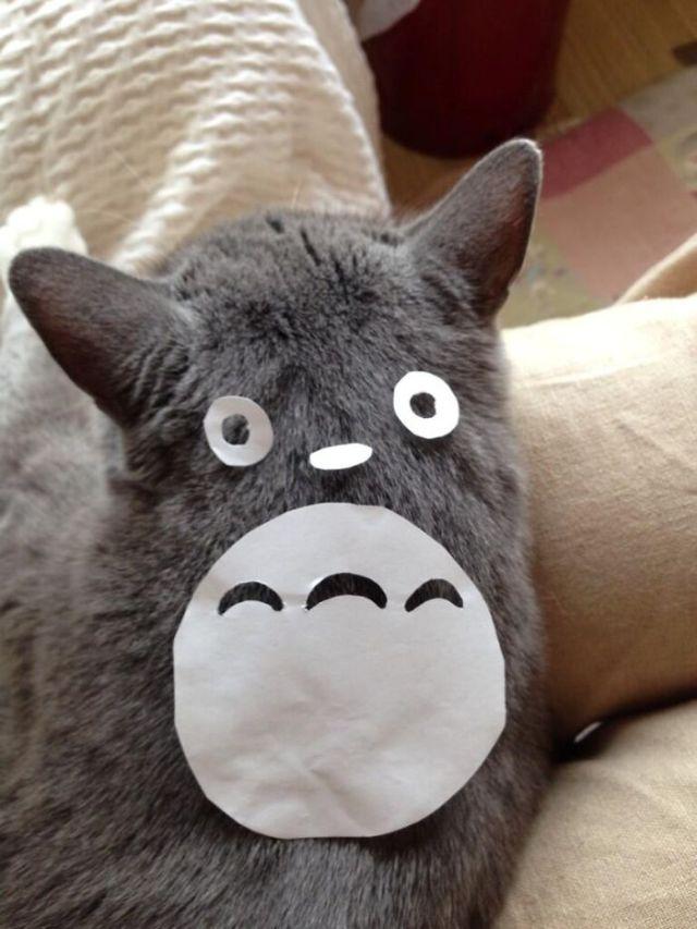 gatos-disfrazados-totoro-duenos-japon (3)