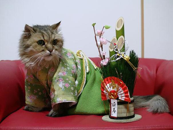 gatos-kimonos-japon (10)