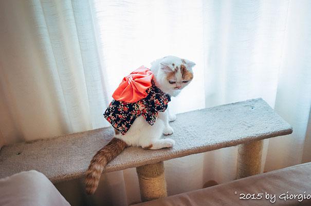 gatos-kimonos-japon (14)