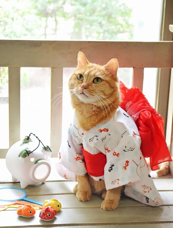 gatos-kimonos-japon (19)
