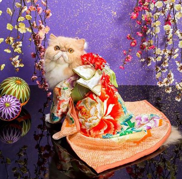 gatos-kimonos-japon (20)