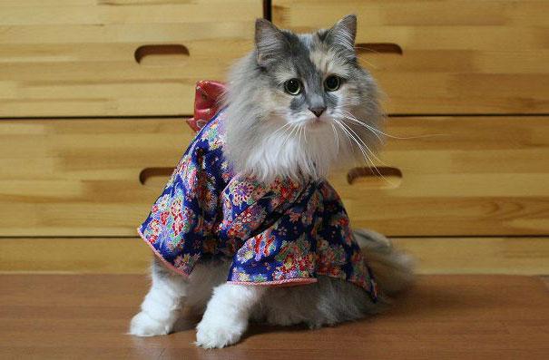 gatos-kimonos-japon (7)