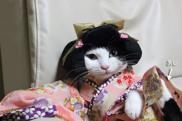 gatos-kimonos-japon (9)