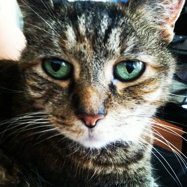gatos-mayores-adoptados (12)