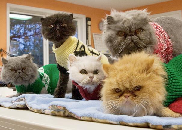 gatos-mayores-adoptados (34)