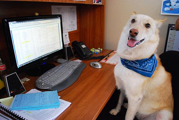 lleva-tu-perro-al-trabajo (5)