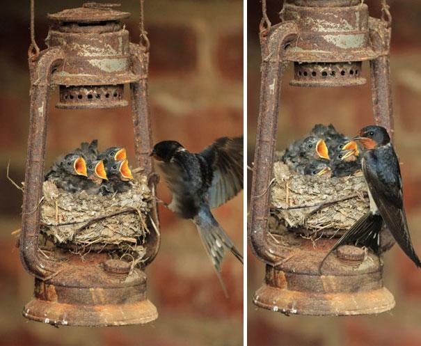 pajaros-nidos-sitios-inusuales (1)