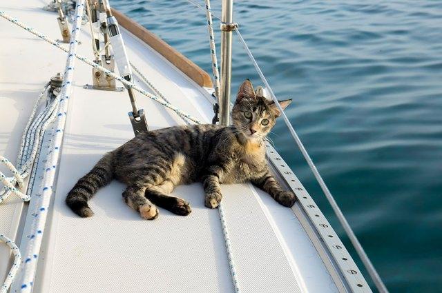 pareja-viajes-mundo-barco-gato-matt-jessica-johnson (24)