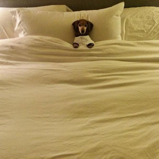 perros-durmiendo-camas-duenos (1)