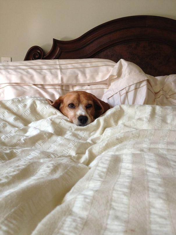 perros-durmiendo-camas-duenos (11)