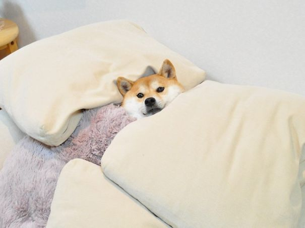 perros-durmiendo-camas-duenos (17)