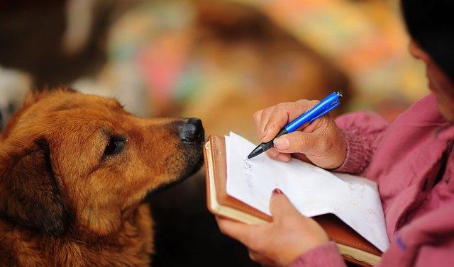 perros-rescatados-festival-yulin-china (17)