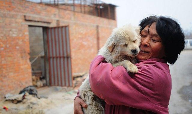perros-rescatados-festival-yulin-china (4)