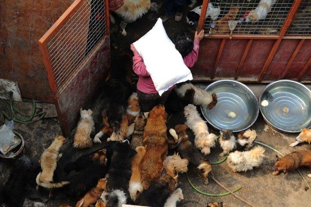 perros-rescatados-festival-yulin-china (5)