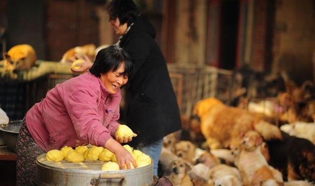 perros-rescatados-festival-yulin-china (7)