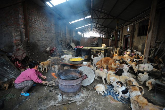 perros-rescatados-festival-yulin-china (8)