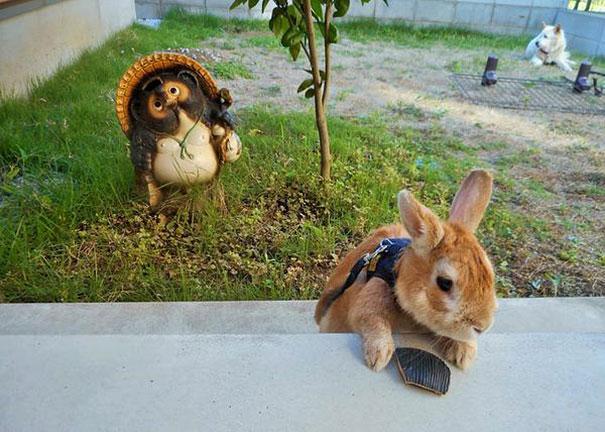 problemas-personas-bajas-conejo-koron-japon (2)