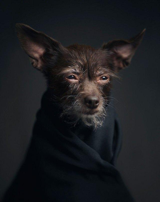 retratos-animales-emociones-humanas-vincent-lagrange (2)