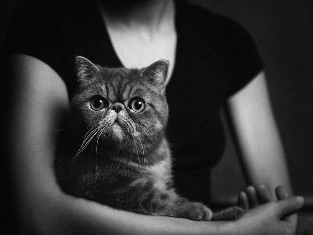 retratos-animales-emociones-humanas-vincent-lagrange (7)
