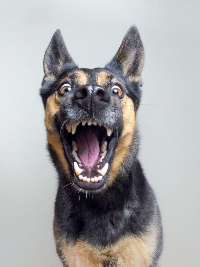 retratos-expresivos-perros-elke-vogelsang (1)