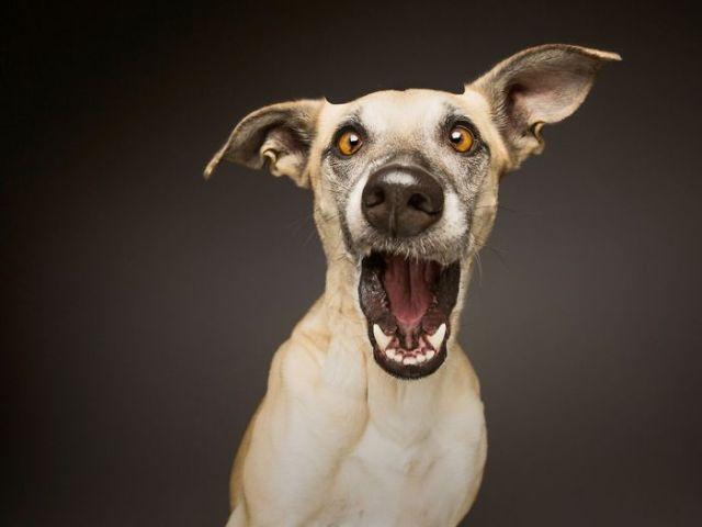 retratos-expresivos-perros-elke-vogelsang (14)