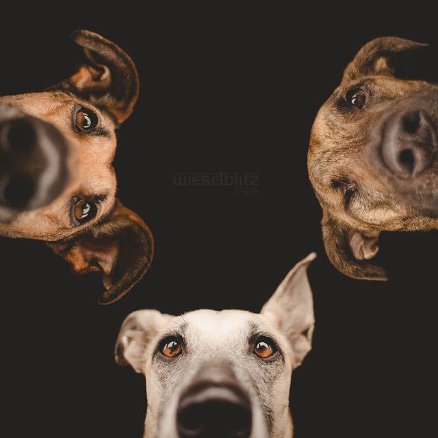 retratos-expresivos-perros-elke-vogelsang (7)