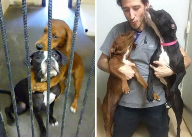 abrazo-perros-refugio-salvar-vida-kala-keira-angels-among-us (2)