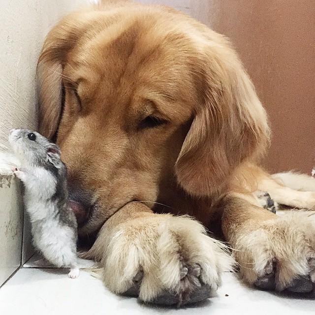 amistad-animal-bob-perro-pajaros-hamster (17)