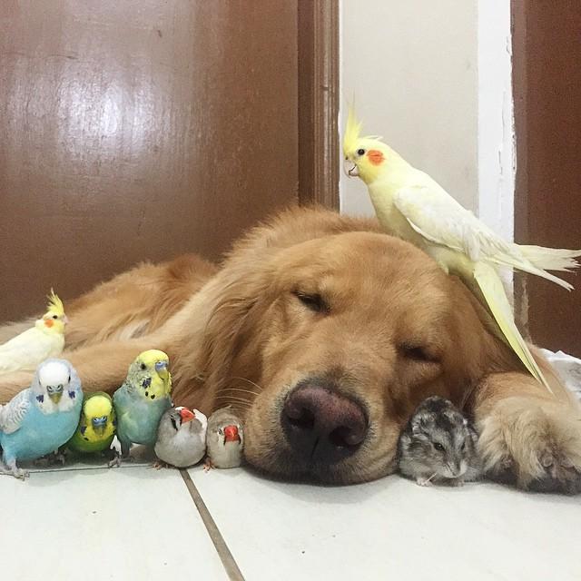 amistad-animal-bob-perro-pajaros-hamster (2)