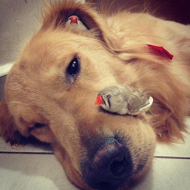 amistad-animal-bob-perro-pajaros-hamster (4)