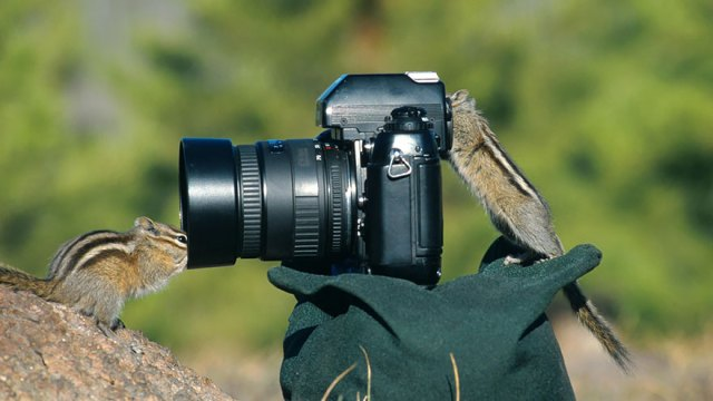 animales-camara-ayudando-fotografos (2)