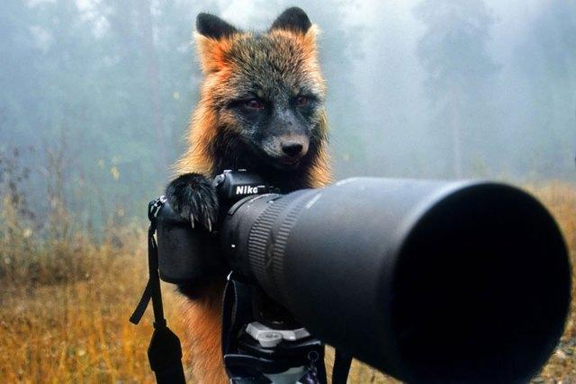 animales-camara-ayudando-fotografos (6)