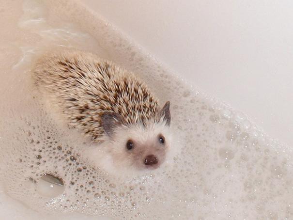 animales-disfrutando-bano (20)