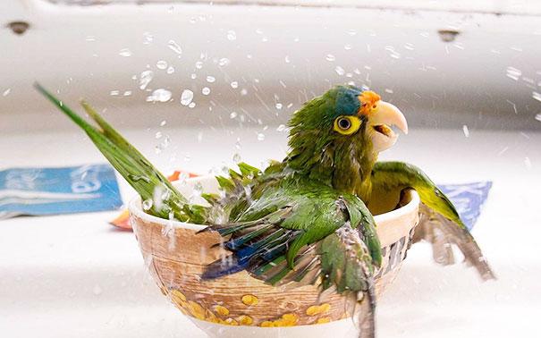 animales-disfrutando-bano (32)