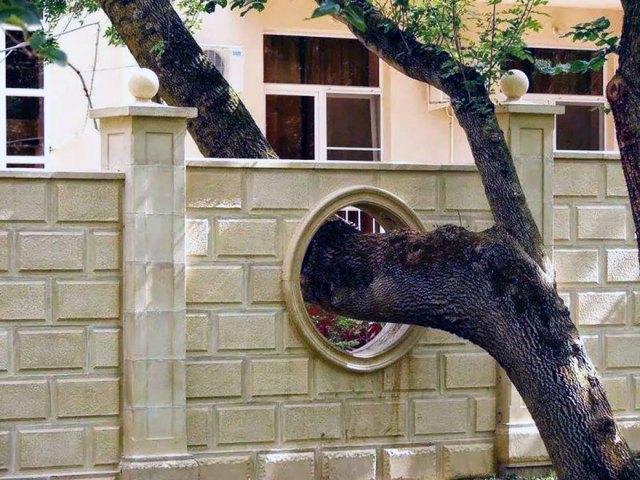 arquitectura-alrededor-arboles (9)